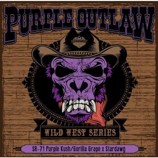 Purple Outlaw