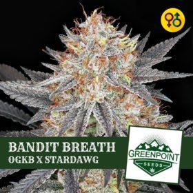 Bandit Breath - OGKB X Stardawg Strain   Greenpoint Seeds