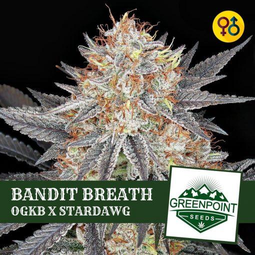 Bandit Breath - OGKB X Stardawg Strain | Greenpoint Seeds
