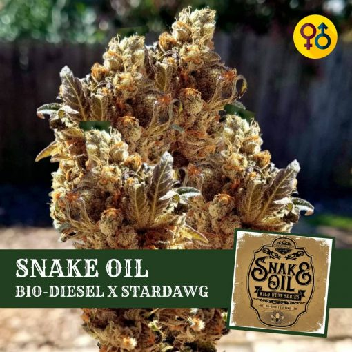 Snake Oil - Bio-Diesel X Stardawg Cannabis Seeds | Greenpoint Seeds