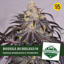 Bodega Bubblegum - Indiana Bubblegum X Stardawg Cannabis Seeds | Greenpoint Seeds
