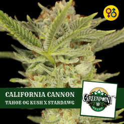 California Cannon Seeds - Tahoe OG Kush x Stardawg | Greenpoint Seeds