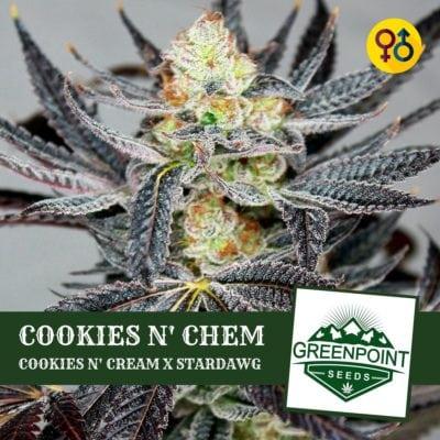Cookies N' Chem - Cookies N' Cream X Stardawg Cannabis Seeds | Greenpoint Seeds