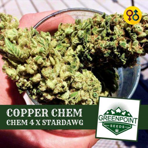 Copper Chem - Chem 4 X Stardawg | Greenpoint Seeds