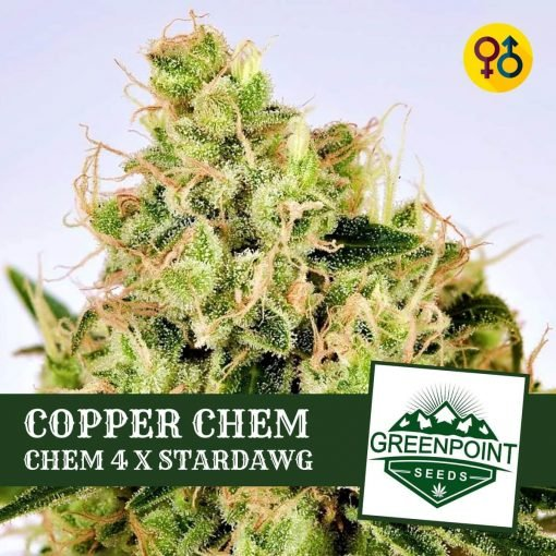 Copper Chem - Chem 4 X Stardawg | Greenpoint Seeds