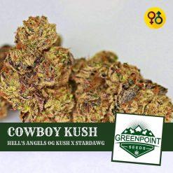 Cowboy Kush - Hell's Angels OG Kush X Stardawg | Greenpoint Seeds