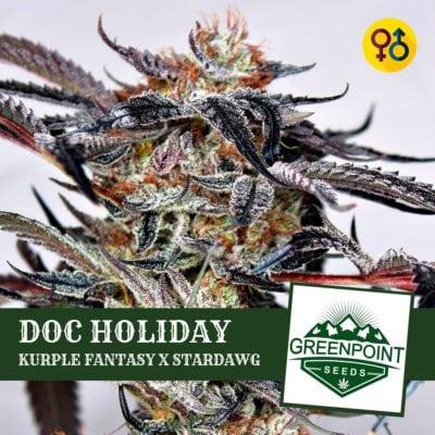 Doc Holiday - Kurple Fantasy   Greenpoint Seeds Strain