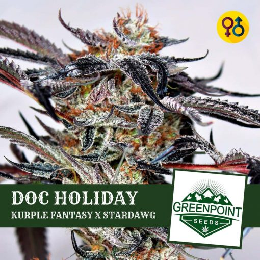 Doc Holiday - Kurple Fantasy | Greenpoint Seeds Strain
