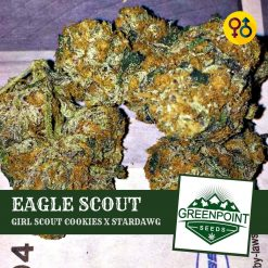 Eagle Scout - Girl Scout Cookies (GSC) X Stardawg | Greenpoint Seeds