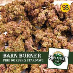 Barn Burner - Fire OG Kush x Stardawg Cannabis Seeds | Greenpoint Seeds