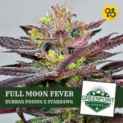 Full Moon Fever - Durban Poison X Stardawg | Greenpoint Seeds