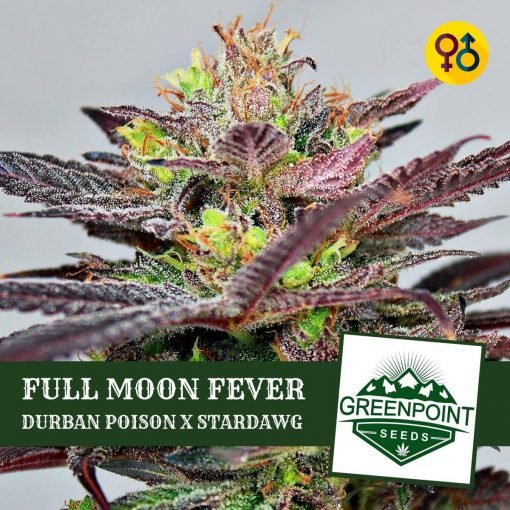 Full Moon Fever - Durban Poison X Stardawg | Greenpoint Seeds