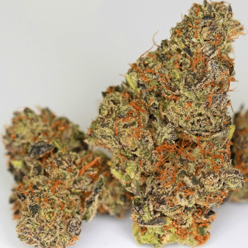 Night Rider (I-95 x Stardawg Seeds) - Greenpoint Seeds