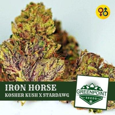 Iron Horse - Kosher Kush X Stardawg | Greenpoint Seeds