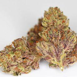 Iron Horse Cannabis Seeds - GPS