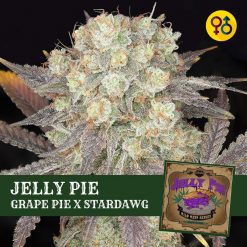 Jelly Pie Cannabis | Greenpoint Seeds - Grape Pie Seeds
