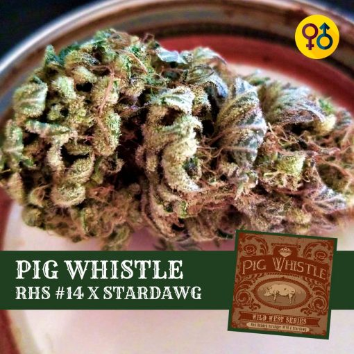 Pig Whistle - Red Headed Stranger #14 X Stardawg Cannabis Seeds | Greenpoint Seeds