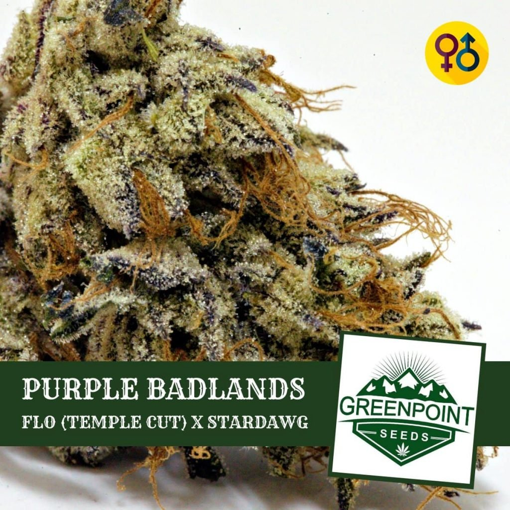 Purple Badlands - Flo (Temple Cut) X Stardawg - Greenpoint Seeds