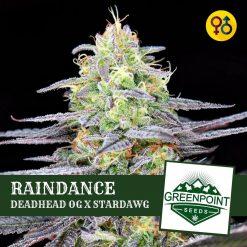 Raindance - Deadhead OG X Stardawg | Greenpoint Seeds