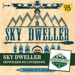 Sky Dweller - Skywalker OG X Stardawg Cannabis Seeds | Greenpoint Seeds