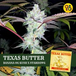 Texas Butter - OrgnKid's Banana Kush X Stardawg | Greenpoint Seeds