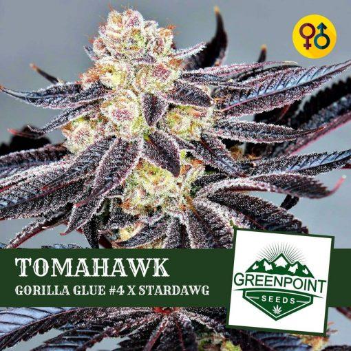Tomahawk - Gorilla Glue #4 X Stardawg | Greenpoint Seeds