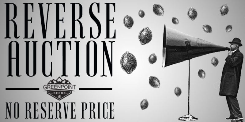 Reverse Auction Greenpoint Seeds