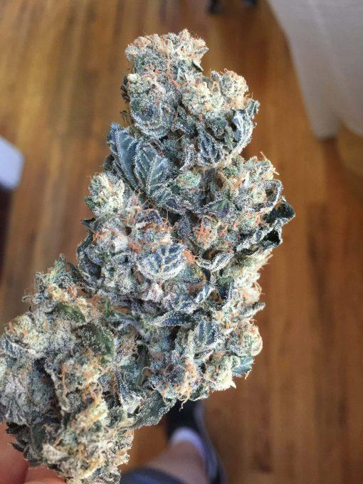 Ace-High (Lemon G x Star Dawg)   Greenpoint Seeds