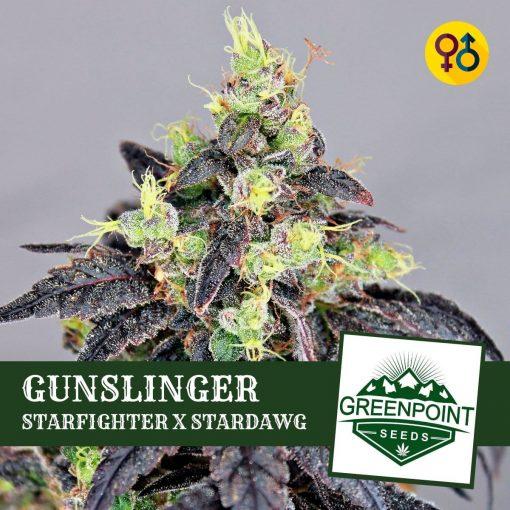 Starfighter X Stardawg Strain - Gunslinger - Greenpoint Seeds