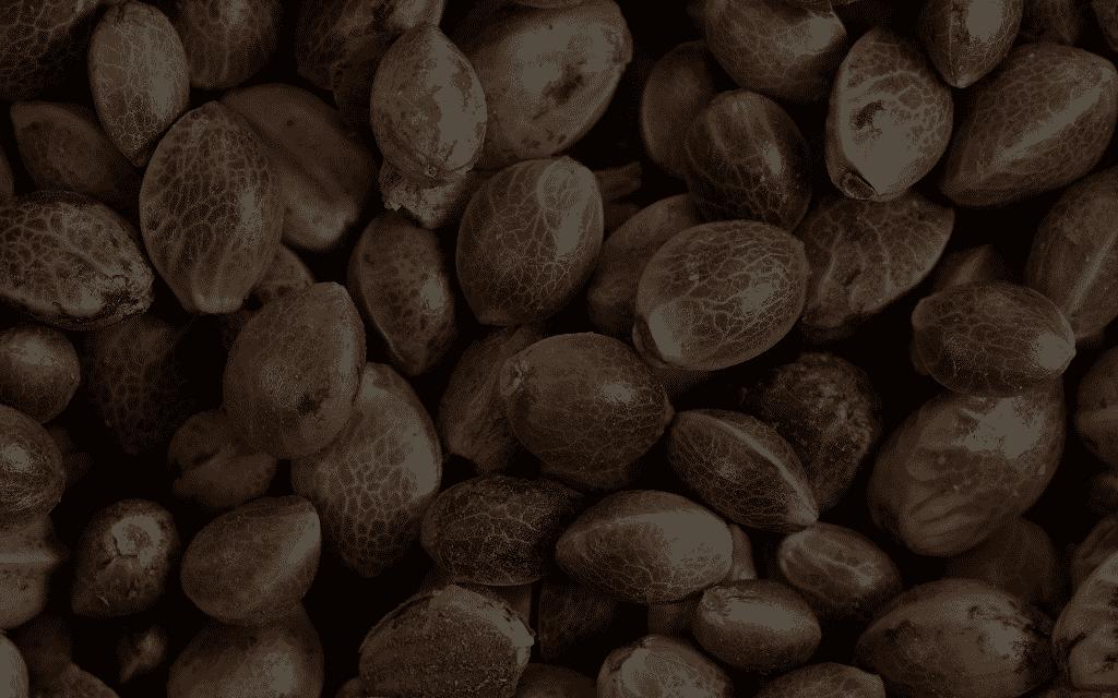 Greenpoint Seeds - Buy Marijuana Seeds Event