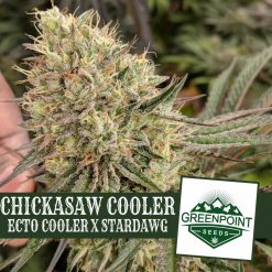 Chickasaw Cooler Ecto Cooler x Stardaw Greenpoint Seeds