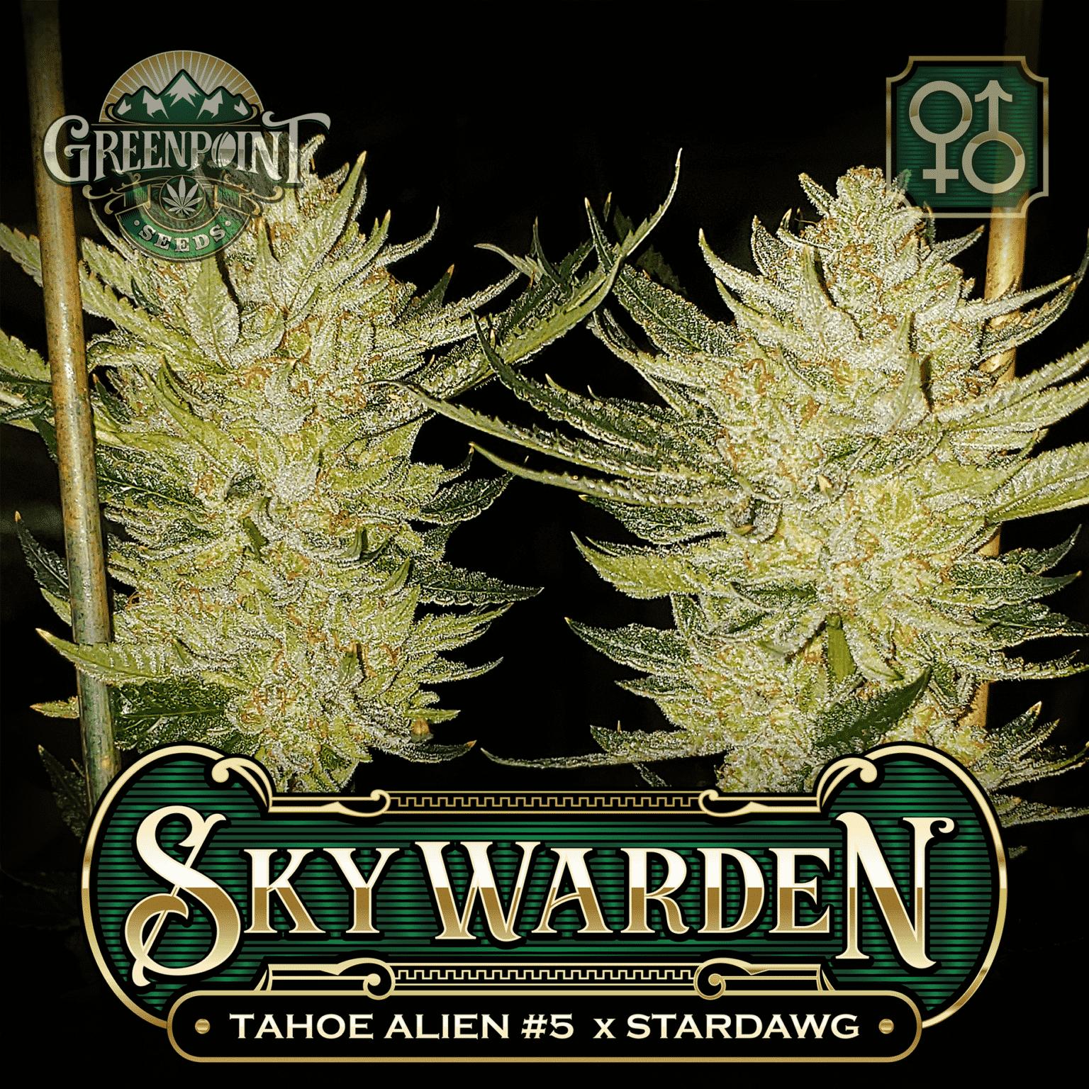 Tahoe Alien #5 x Stardawg Seeds - Sky Warden Cannabis Seeds - Greenpoint Seed Bank Colorado