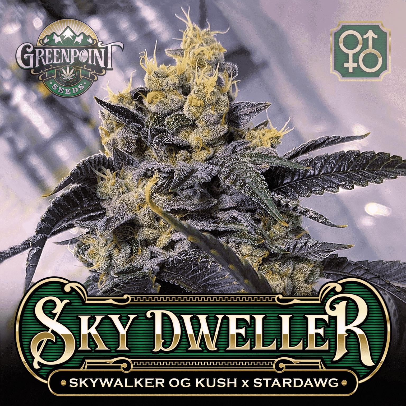 Tahoe Alien #5 x Stardawg Seeds | Sky Warden Cannabis Seeds - USA