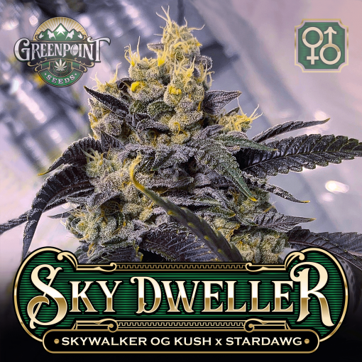 Tahoe Alien #5 x Stardawg Seeds | Sky Warden Cannabis Seeds - USA
