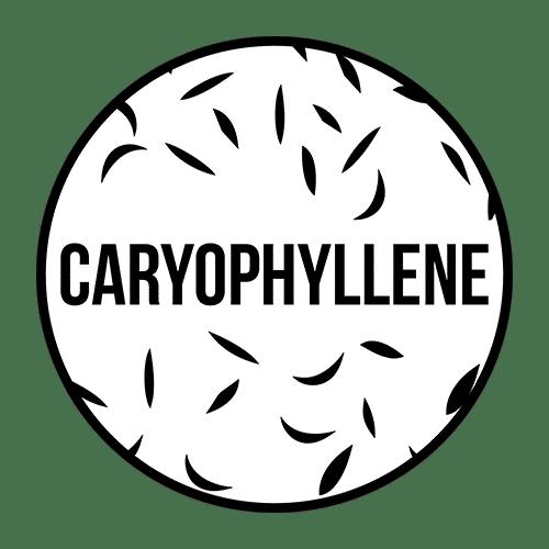 Caryophyllene Terpene - Cannabis Terpenes