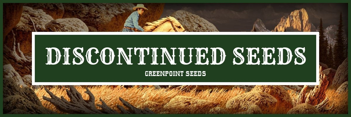Discontinued Cannabis Seeds