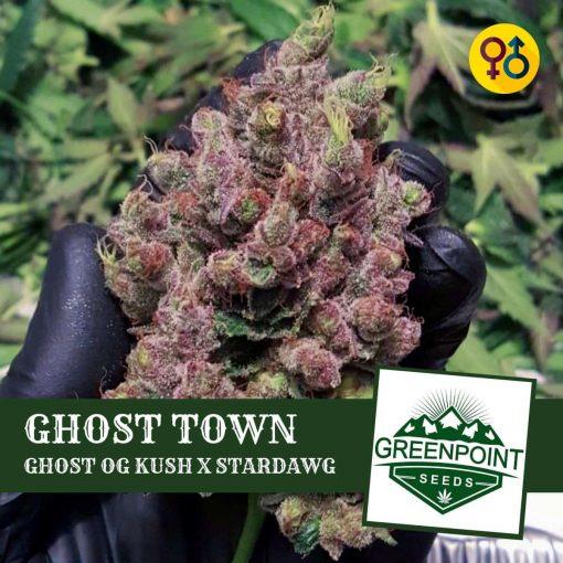 Ghost OG Kush X Stardawg | Greenpoint Seeds