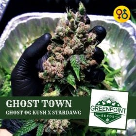 Ghost Town Cannabis Seeds - Ghost OG Kush X Stardawg | Greenpoint Seeds