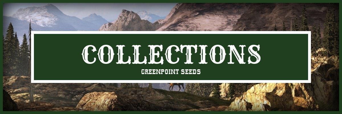 Cannabis Seeds Collections - Greenpoint Marijuana Seeds