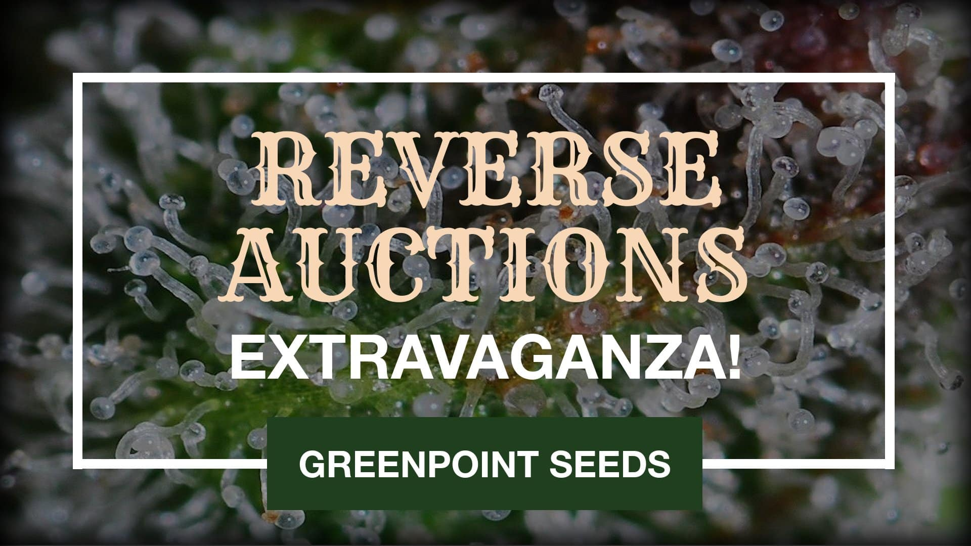 Reverse Auctions - Greenpoint Seeds