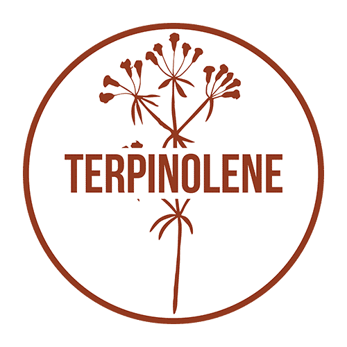 Terpinolene Terpene - Cannabis Terpenes