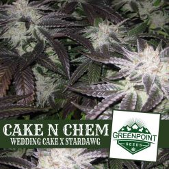 Cake N Chem (Wedding Cake x Star Dawg) | Greenpoint Seeds