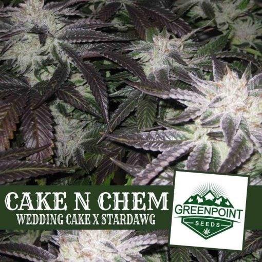 Cake N Chem (Wedding Cake x Star Dawg)   Greenpoint Seeds