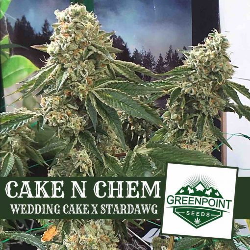 Cake N Chem Wedding Cake x Stardawg Greenpoint Seeds