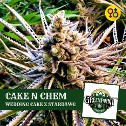 Cake N Chem Cannabis Seeds - Wedding Cake x Stardawg Strain