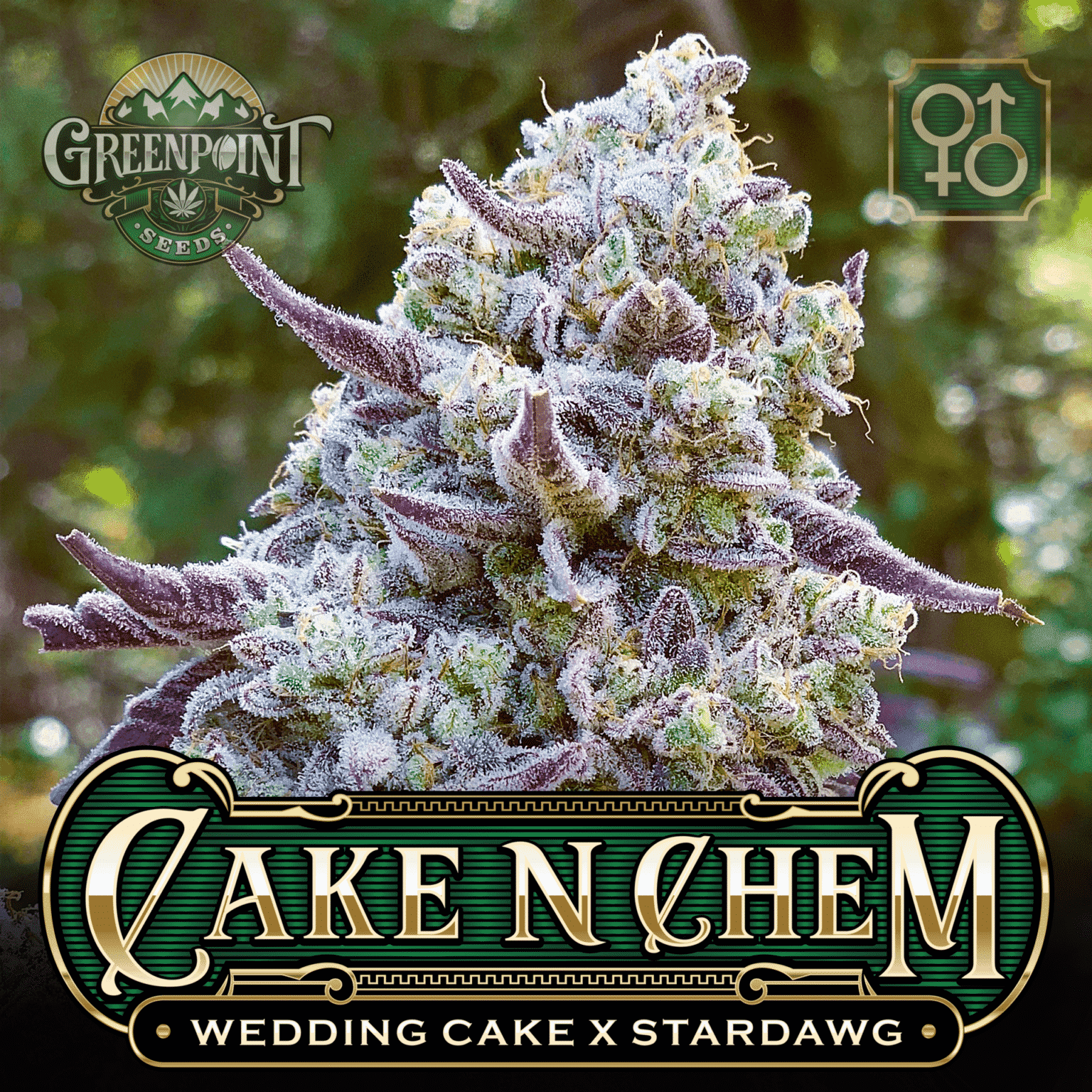 Wedding Cake x Stardawg Seeds | Cake N Chem Cannabis Seeds - US Seed Bank