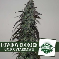 Cowboy Cookies Gmo X Stardawg Greenpoint Seeds