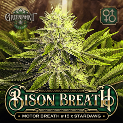 Motor Breath #15 x Stardawg Seeds - Bison Breath Cannabis Seeds - Colorado Seed Bank