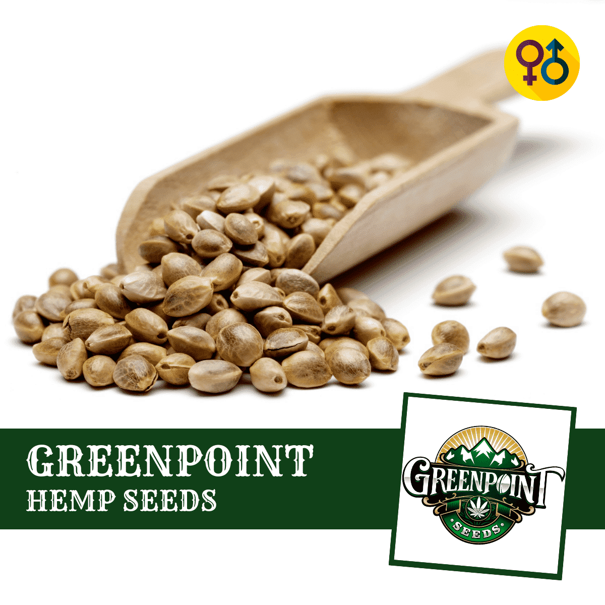 Buy Cannabis Seeds Online - Greenpoint Seeds - Feminized, Regular and Autoflower Marijuana Seeds and Genetics
