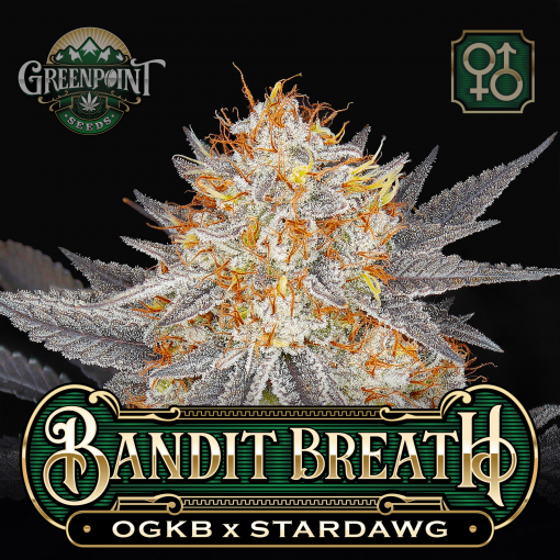OGKB x Stardawg Seeds | Bandit Breath Cannabis Seeds - USA